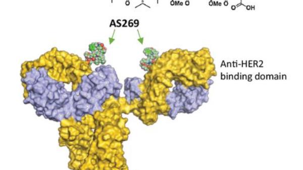 疾病控制率100%!新型药物ARX788有望攻克HER2阳性乳腺癌耐药难题