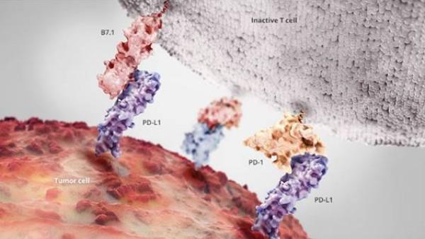 抗癌神药PD-1抗体挑战万癌之王